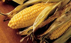 Sweet Corn In Husks