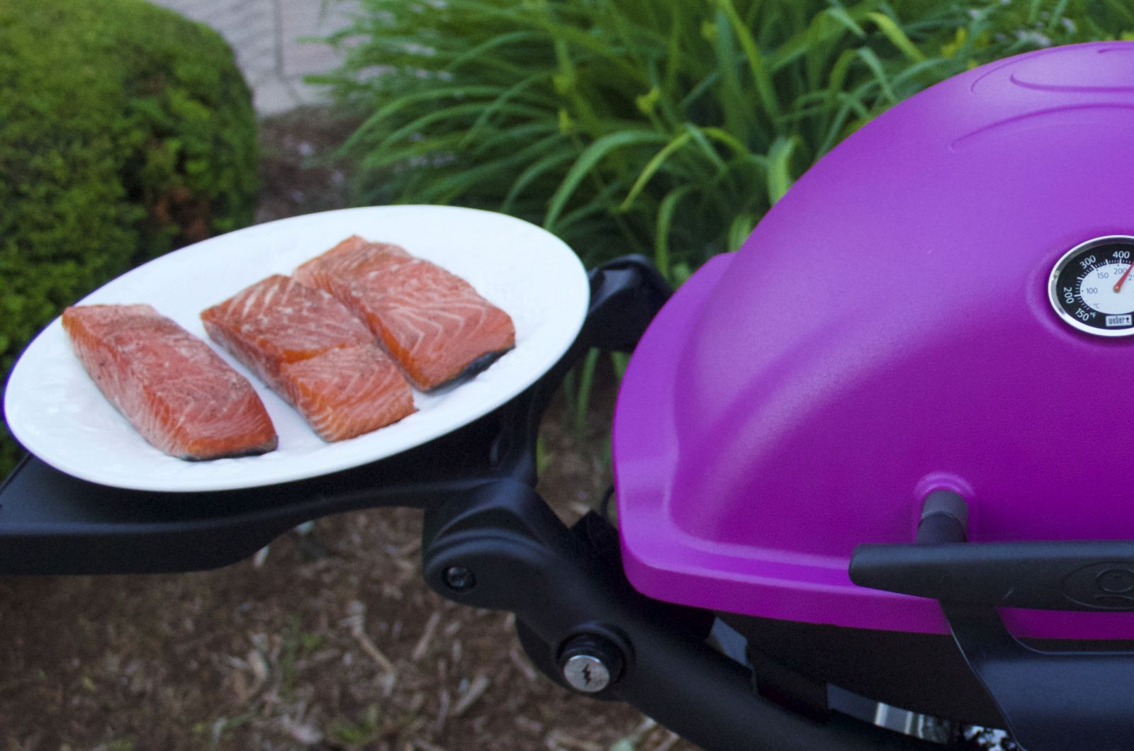 Salmon and Weber Q 1200