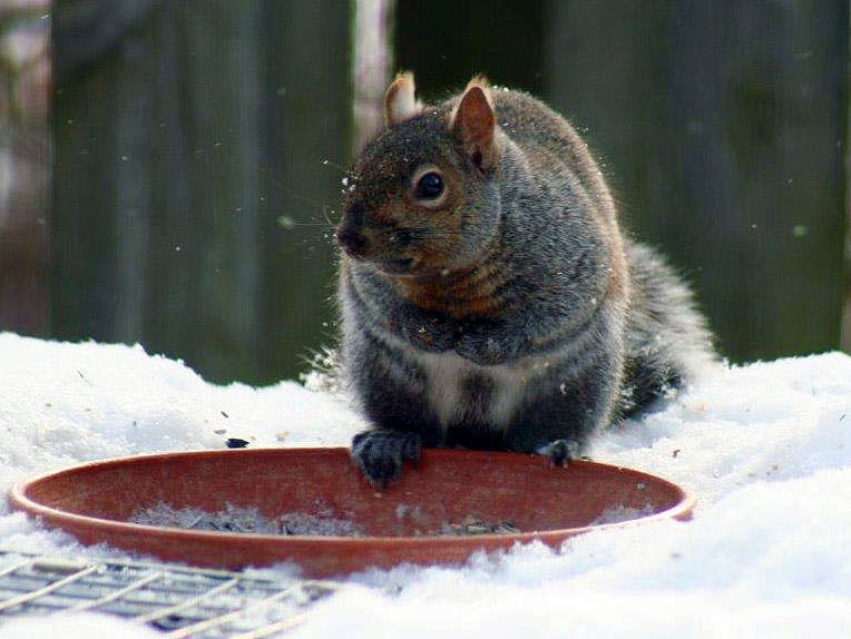 Squirrel looking at a propane tank hose - Do I Need To Turn Off The Propane Tank After Grilling? - Burning Questions